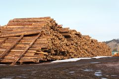 Lumber Mill Log Pile Stock Photo