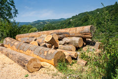 Lumber in mountains Stock Photography