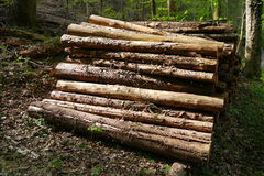 Lumber, pile of logs in the black forest Royalty Free Stock Photo