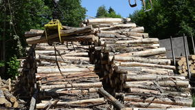 Lumber process mill works. Cranes loaders lift and load stack of timber logs at lumber processing mill yard stock footage