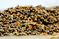 Lumber Processing 2. Piles of logs ready for processing at a lumber mill Royalty Free Stock Image
