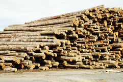 Lumber Processing 3. Piles of logs ready for processing at a lumber mill Stock Photos