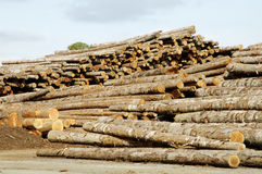 Lumber Processing 5. Piles of logs ready for processing at a lumber mill Stock Image