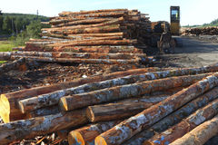 Lumber ready for export, Coos Bay Oregon. Stock Photography