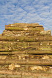 Lumber stack. Stack of lumber under bright blue sky Stock Photography