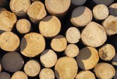 Lumber stack. Stock Images