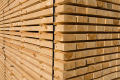 Lumber and timber. Piles of pine planks stacked for drying Royalty Free Stock Photo