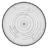 Lumber wood grayscale isolated on white background.  Royalty Free Stock Image
