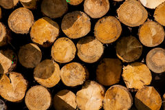 Lumber wood. On a pile Stock Photography