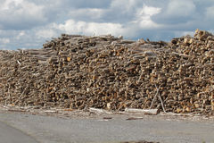 Lumber yard. Timber stacked in an industrial area Stock Photos