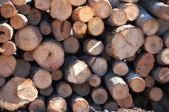 Lumber yard Stock Photos