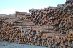 Lumber yard business timber stacked forest industry environment lumbering wood. Lumber yard wood stack timber construction lumbering forestry cut royalty free stock images