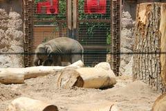 Lumbering słonia Obraz Stock