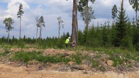 Lumberjack работая в лесе сток-видео