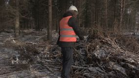 Lumberjack с компьтер-книжкой говоря в разрушенном лесе акции видеоматериалы