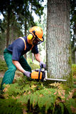 Lumberjack stock photography