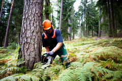 Lumberjack Royalty Free Stock Photos