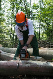 lumberjack Obraz Royalty Free