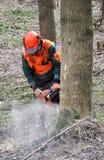 lumberjack Obrazy Royalty Free