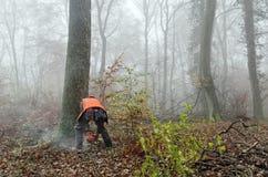lumberjack Obrazy Stock