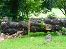 lumberjack Immagine Stock Libera da Diritti