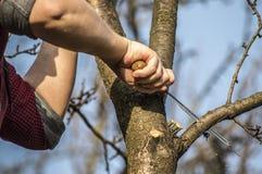lumberjack Fotos de archivo