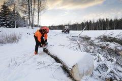 Lumberjack in action Royalty Free Stock Photo