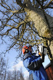 Lumberjack in action. Lumberjack, woodcutter with chainsaw, hard-hat and protective gear Stock Photos
