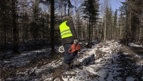 Lumberjack with chainsaw and coffee in forest in winter stock video
