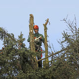 Lumberjack with a chainsaw, cutting down a tree Stock Photo