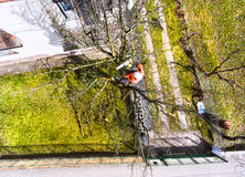 Lumberjack with chainsaw and harness pruning a tree. Arborist cuting tree branches. High angle view Royalty Free Stock Photos