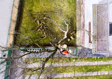 Lumberjack with chainsaw and harness pruning a tree. Arborist cuting tree branches. High angle view Stock Image
