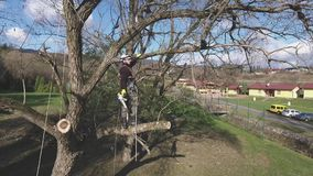 Lumberjack with chainsaw and harness pruning a tree. Arborist cuting tree branches Royalty Free Stock Photography