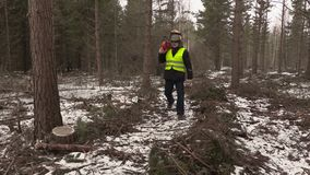 Lumberjack with chainsaw walking in destroyed forest stock video