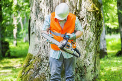 Lumberjack checking chainsaw near tree Stock Photo