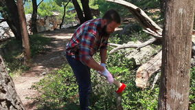 Lumberjack is chopping dry tree stock video footage