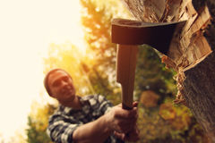 Lumberjack chopping wood in the forest. Axe closeup Royalty Free Stock Images