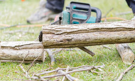 Lumberjack cuts a tree in the garden Royalty Free Stock Images