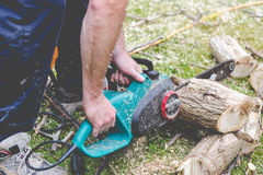 Lumberjack cuts a tree in the garden Stock Photo