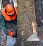 Lumberjack cutting down tree Stock Images