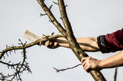 Lumberjack. Cutting down the tree whit an ax Royalty Free Stock Images