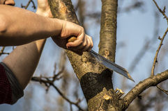 Lumberjack. Cutting down the tree whit an ax Royalty Free Stock Image