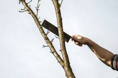 Lumberjack. Cutting down the tree whit an ax Royalty Free Stock Photo