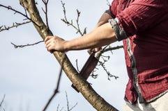 Lumberjack. Cutting down the tree whit an ax Stock Photo