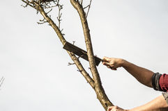 Lumberjack. Cutting down the tree whit an ax Stock Images