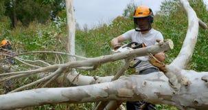 Lumberjack cutting fallen tree in the forest 4k stock footage