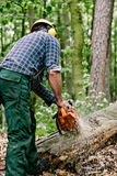 Lumberjack cutting tree. Rear view of male lumberjack cutting tree in forest with chainsaw royalty free stock photography