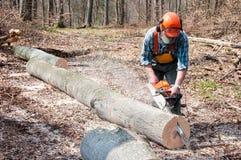 Lumberjack cutting tree Stock Image