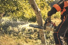 Lumberjack cutting tree with a chainsaw. In summer Stock Photography