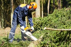 Lumberjack cutting tree in forest Royalty Free Stock Photos